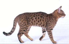 加州闪亮猫脱肛怎么治疗 脱肛治疗方法