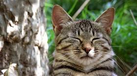被蒂凡尼猫咬伤怎么处理 蒂凡尼猫咬伤处理方法