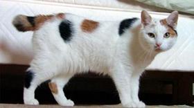 马恩岛猫除草剂中毒怎么回事 除草剂中毒治疗方案