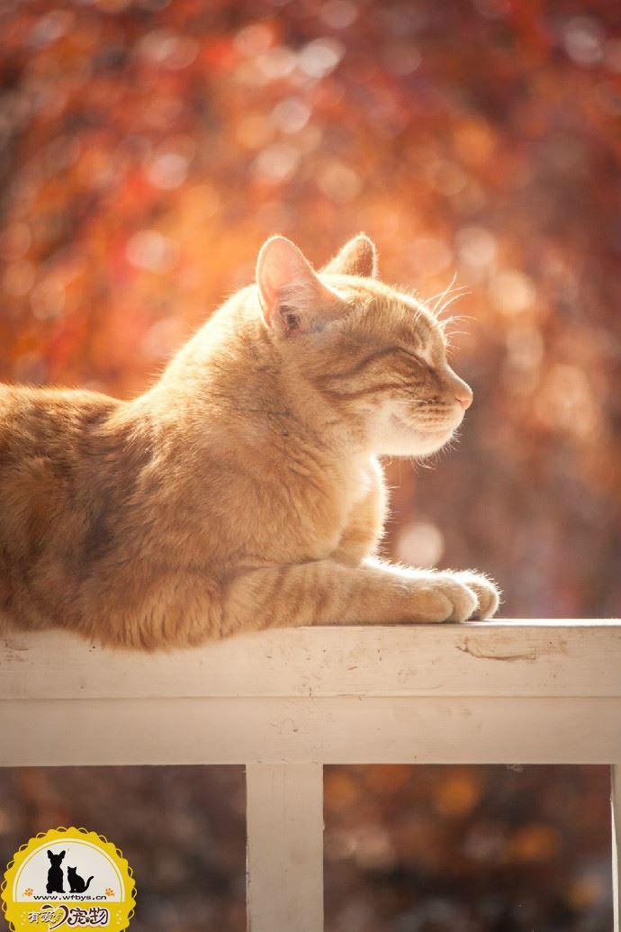 猫猫呼吸急促怎么处理