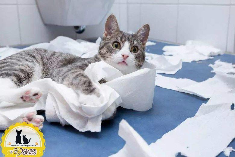 猫瘟后多久可以养猫