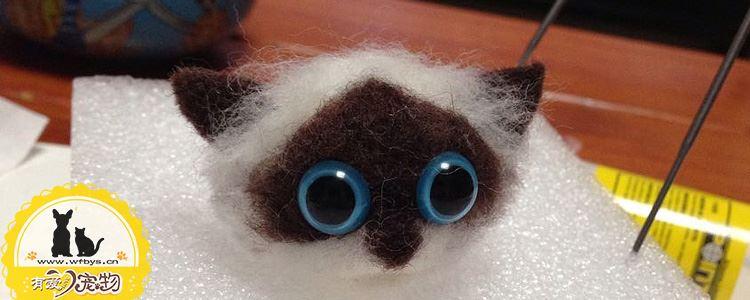 伯曼猫奶水不足怎么办 伯曼猫奶水不足怎么催奶才不伤到猫