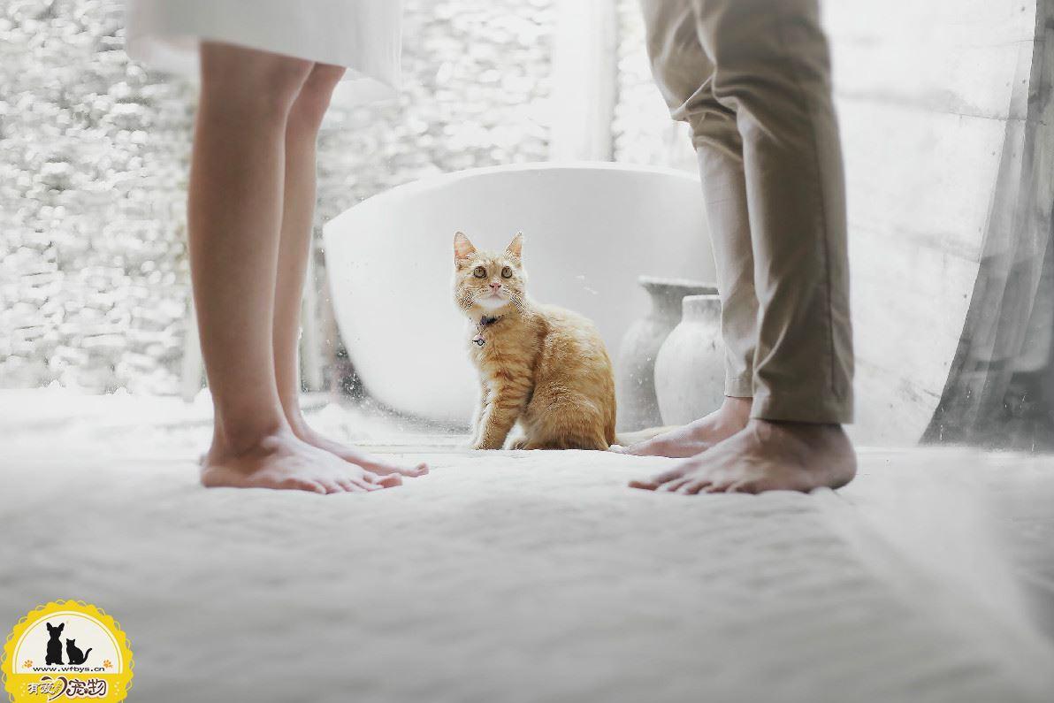 猫咪没打疫苗能绝育吗