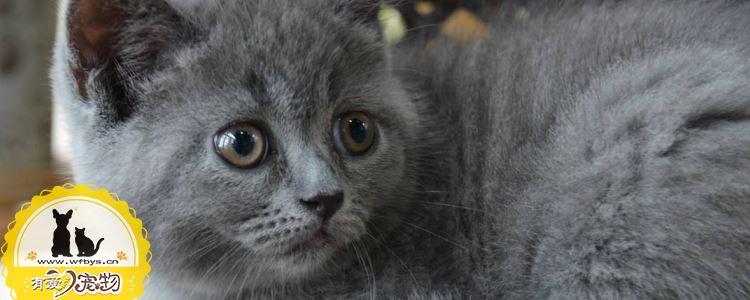 猫藓症状 猫得了猫藓症状