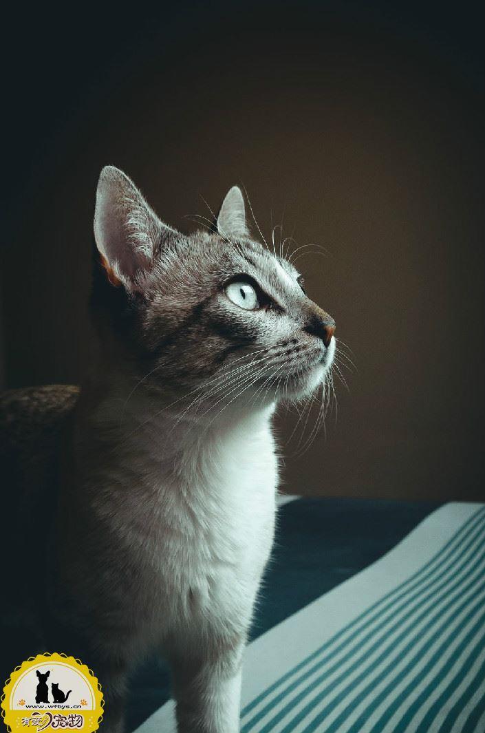 猫尿血怎么办