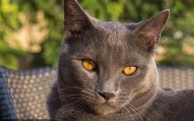 沙特尔猫排尿异常怎么办 尿路感染原因