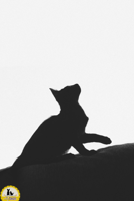 猫咪安乐死过程