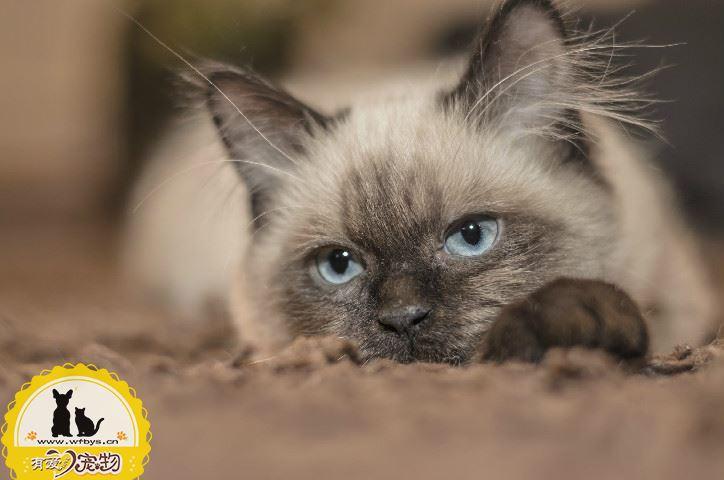 猫咪手术后苏醒的过程