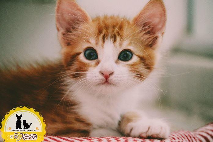 猫有鼻涕怎么办