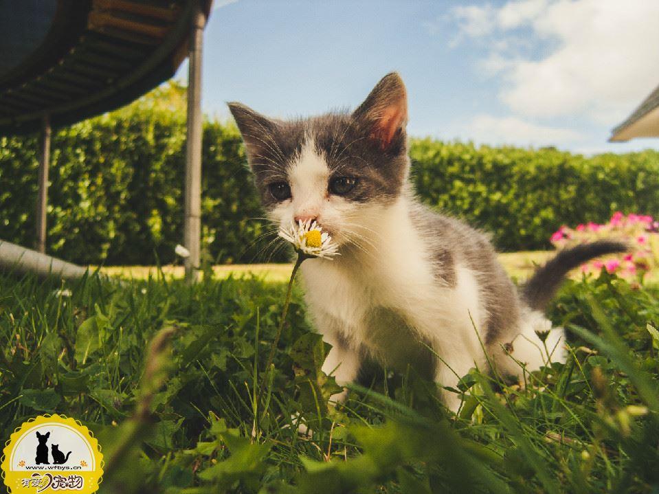 猫打疫苗的顺序 猫怎么打疫苗