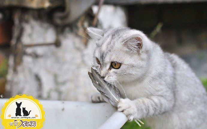 猫用速诺用法用量
