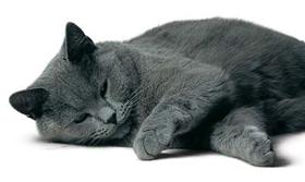 沙特尔猫尿结石怎么治疗 尿结石治疗方法