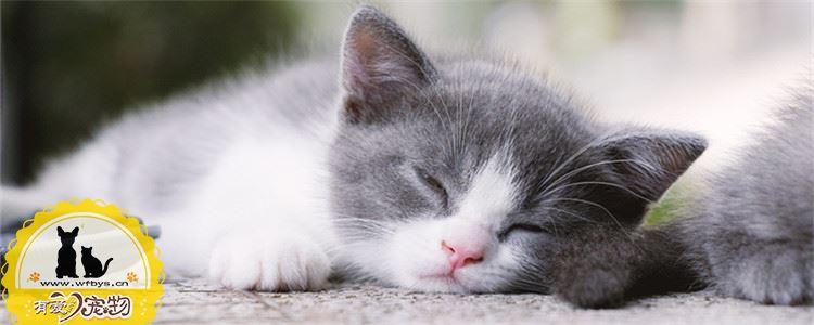 猫咪摔伤了能自愈吗