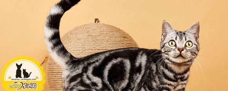 猫闭尿会出现什么情况 猫闭尿后需要知道的护理知识