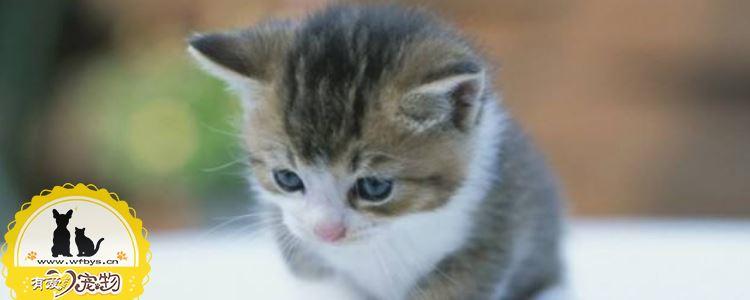 猫糖尿病的症状 猫糖尿病可以治愈吗