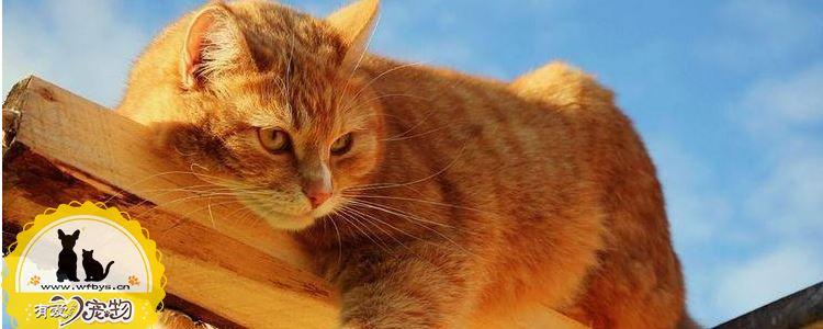 猫常见的疾病有哪些 该如何预防