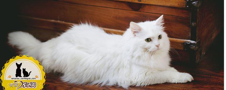 老年猫咪怎么护理 老年猫健康护理手册