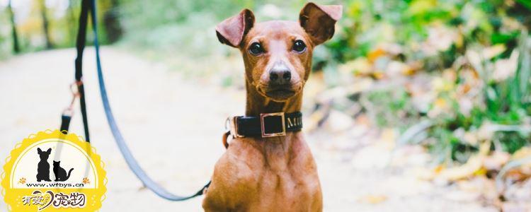 狗狗常见的疾病有哪些 这些疾病比较常见