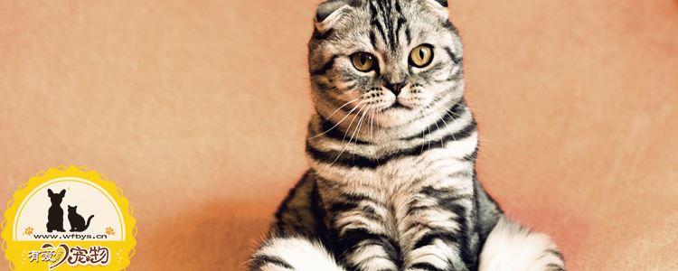 猫发情尿味如何去除 去味顽固尿味大作战
