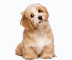 狗螨虫怎么治疗