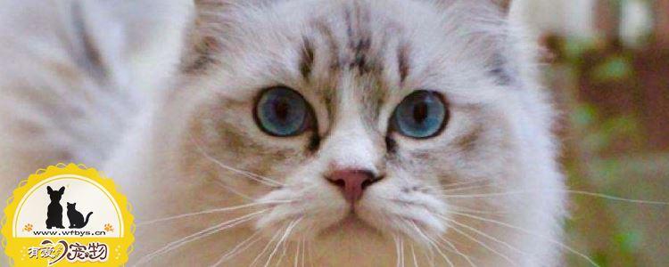 小猫需要打哪些疫苗 看这一篇就够了
