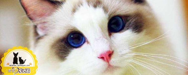 猫毛囊炎和猫藓的差别 知道这三点就够了