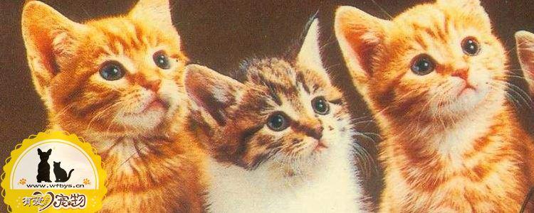 猫绝育前准备 需要禁食禁水多久你知道吗