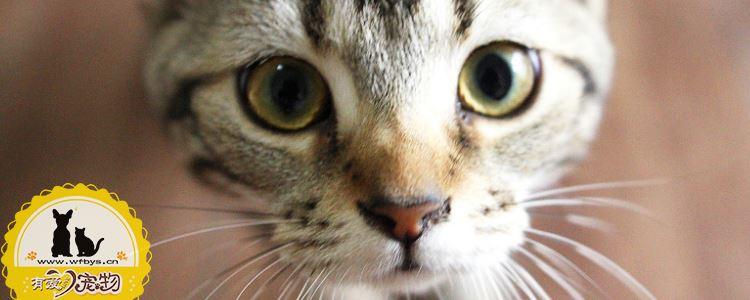 猫体内驱虫多久一次 要注意什么