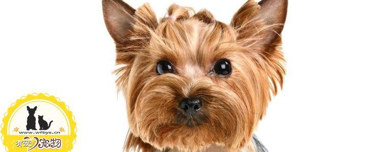 狗狗有必要打八联吗 狗狗打八联好还是六联好