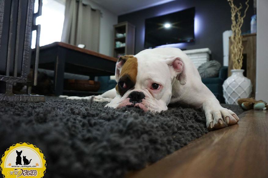 狗狗微量元素吃多了会怎样