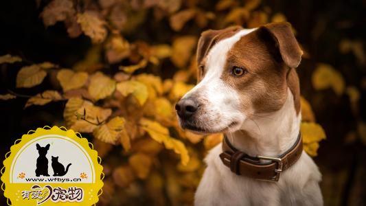 犬瘟和细小是什么