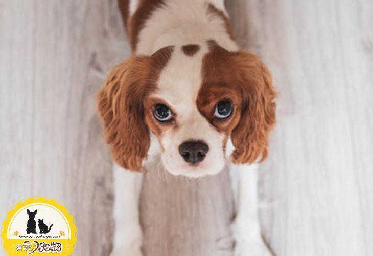 狗狗皮肤病可以用人的药吗