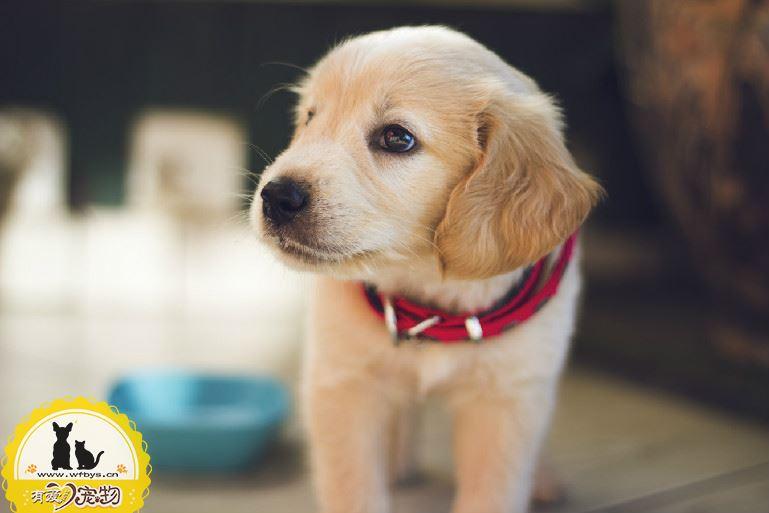狗狗拉稀吃什么药 小心没病吃药反致病