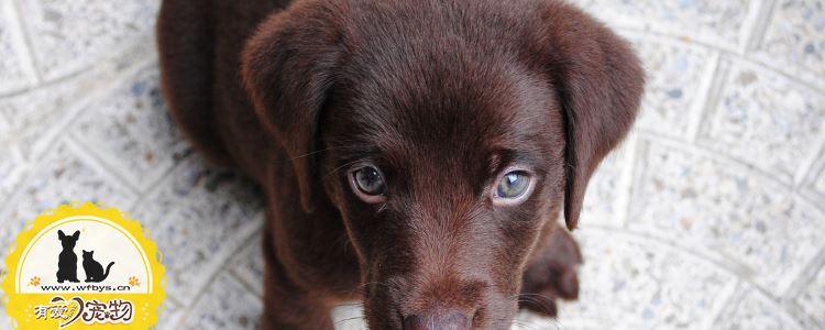 狗狗常见的病有哪些 狗狗常见的病有几种