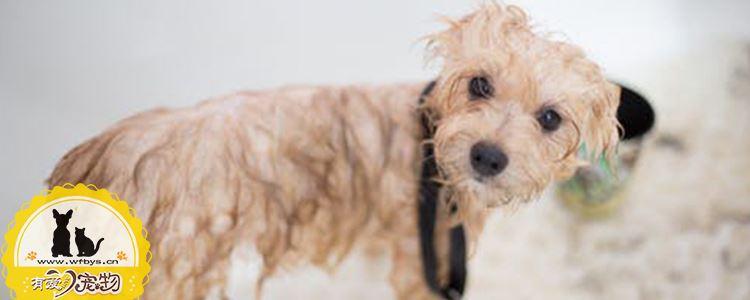 小狗容易得的四大病 高死亡率易误判的疾病你必须了解
