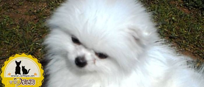 狗尿路感染能自愈吗 狗尿路感染是什么原因