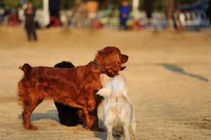 田野小猎犬感冒怎么治疗 田野小猎犬感冒护理方法