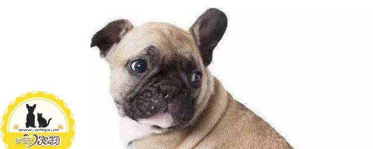 狗尿路感染吃什么药 狗尿路感染需要知道的重点知识!