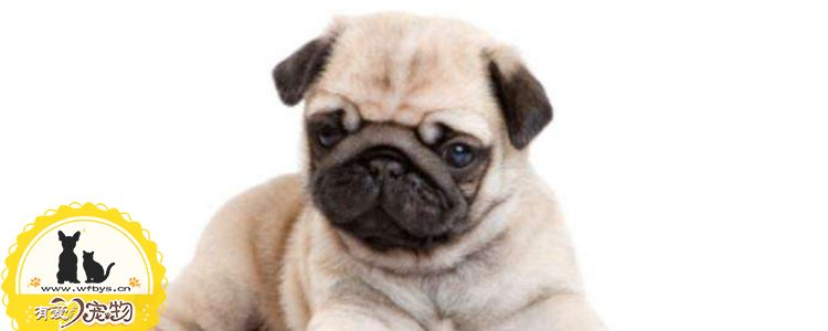 狗尿路感染能自愈吗 狗尿路感染的治疗办法