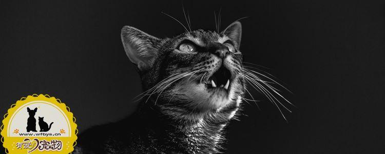 给猫注射疫苗注意事项 注射疫苗禁忌须知