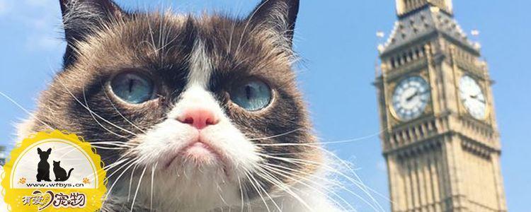 猫咪呕吐的常见原因 猫咪呕吐原因大解密