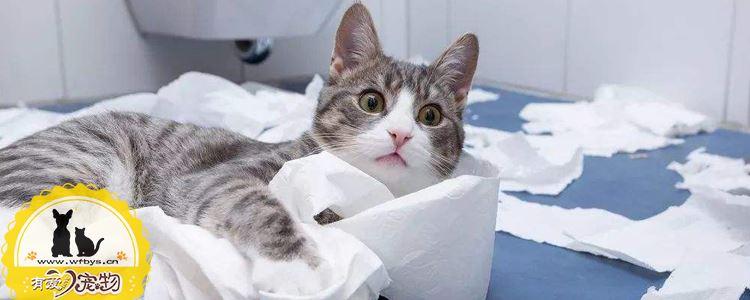 猫咪尿结石怎么治疗 光多喝水可不行