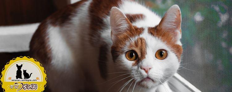 猫致死的病 警惕这十大隐形杀手