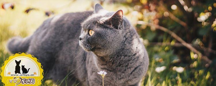 猫瘟怎么治疗 猫瘟可以治愈