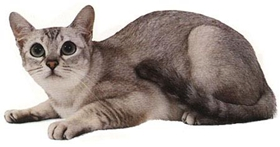 波米拉猫抑郁症有什么症状 抑郁症症状介绍