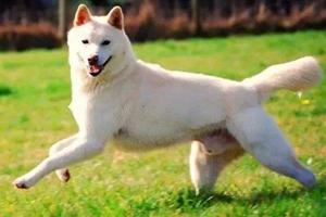 怎么预防卡南犬中暑 卡南犬预防中暑方法