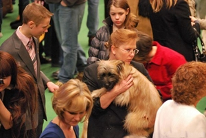 比利牛斯牧羊犬得了耳螨怎么治疗