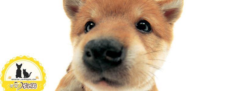 狗抑郁的十二个表现 都太让人心痛了