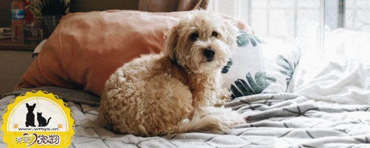 狗狗身上痒怎么办 狗狗可能患了皮肤病