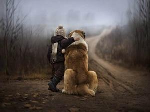 冰岛牧羊犬得狗瘟怎么治疗 狗瘟治疗方法